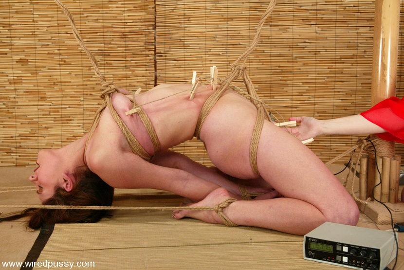 hogtied wiredpussy